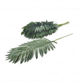 Liść palma gęsty