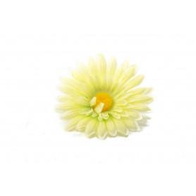 Garbera główka kwiatowa