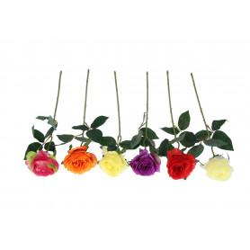 Róża pojedyncza