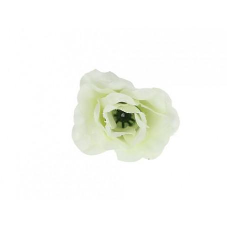 50213-cream