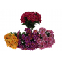 Kwiaty sztuczne bukiet dalii