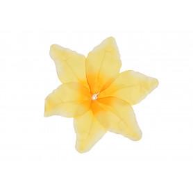 Lilia główka kwiatowa