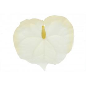 Anturium główka kwiatowa
