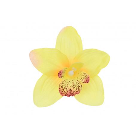 52415-lemon beauty
