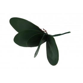 Piankoway liść Storczyka
