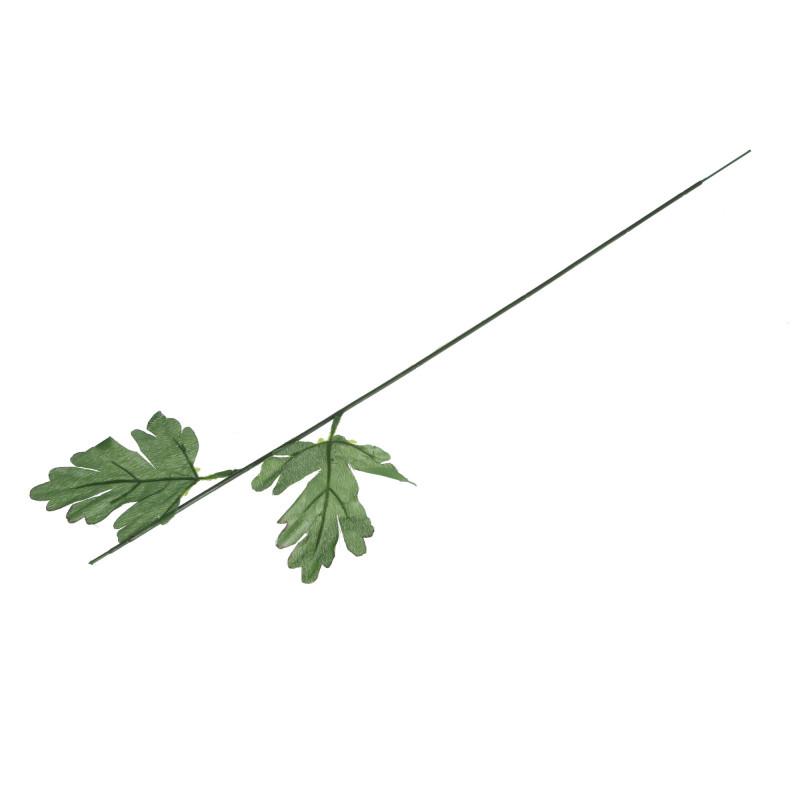 Łodyga zielona chryzantema