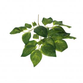 Liść Orzecha zielony