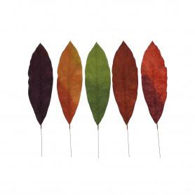Liść eliptyczny kolorowy
