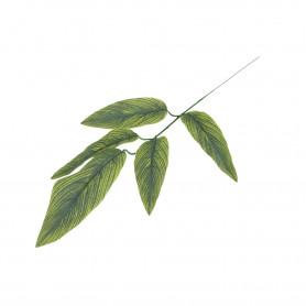 Liść mango z jasno zielonymi żyłkami