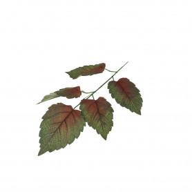 Liść Leszczyny ciemno zielony z dodatkiem czerwieni