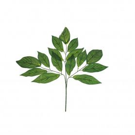 Liść mango ciemny zielony z jasno zielonymi żyłkami