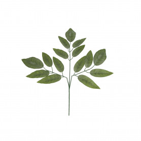 Liść mango zielony