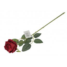 Róża welurowa, gałązka