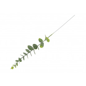 Gałązka Eukaliptusa