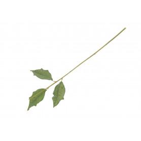 Łodyga do Poinsettia