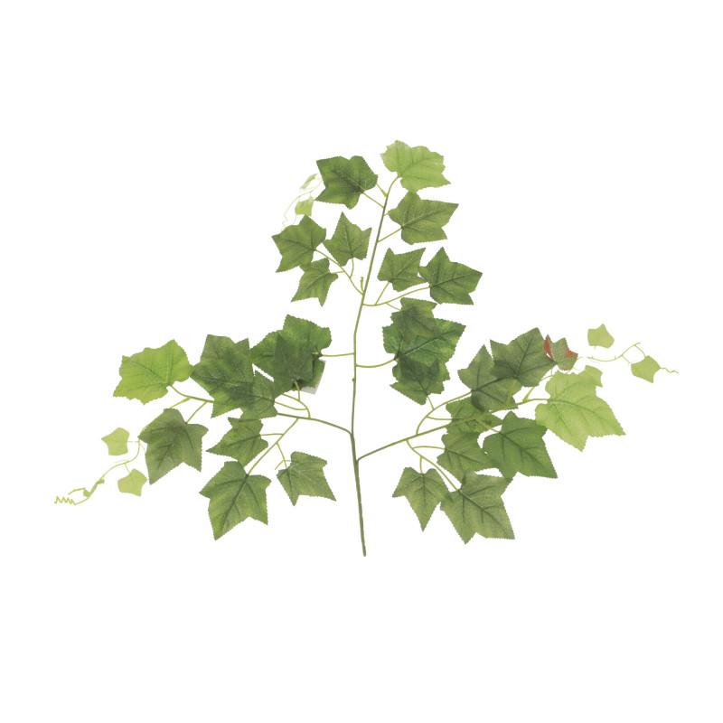 Liść winogrona ciemno zielony