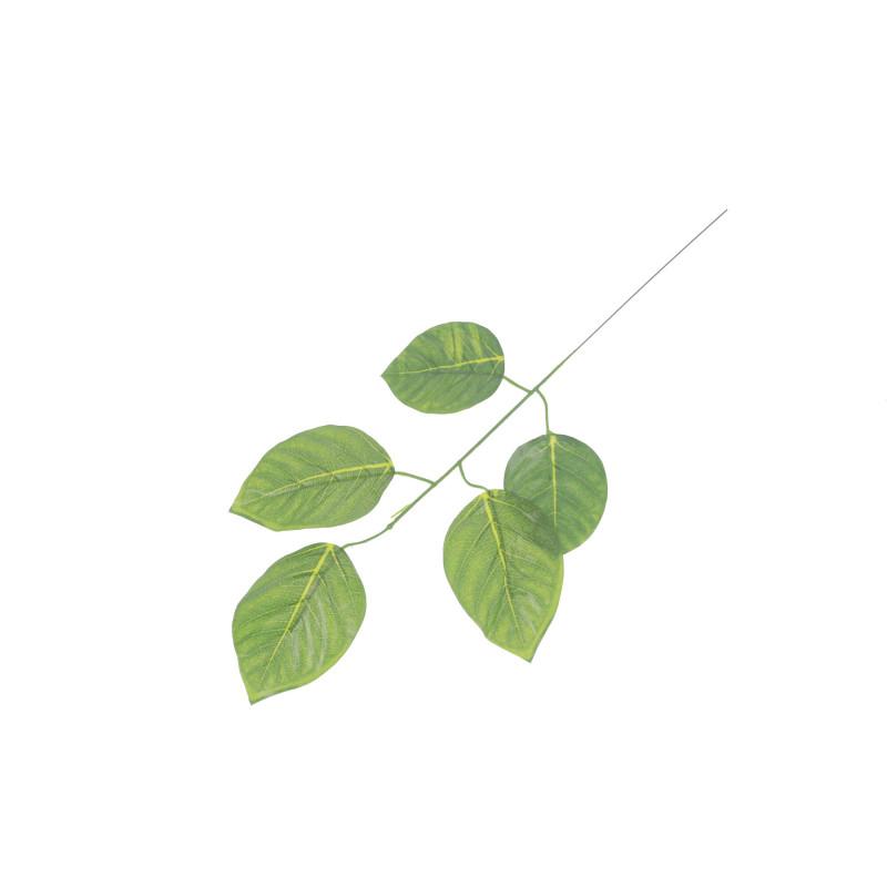 Liść buku jasna zieleń
