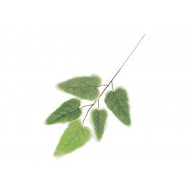 SURMIA Z BIAŁYMI BRZEGAMI (liść)