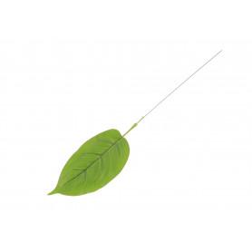 Liść Pothos zielony
