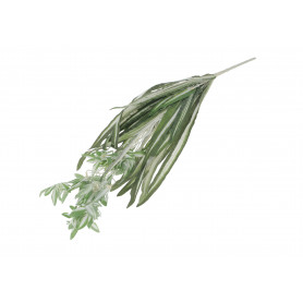 Roślina zielona