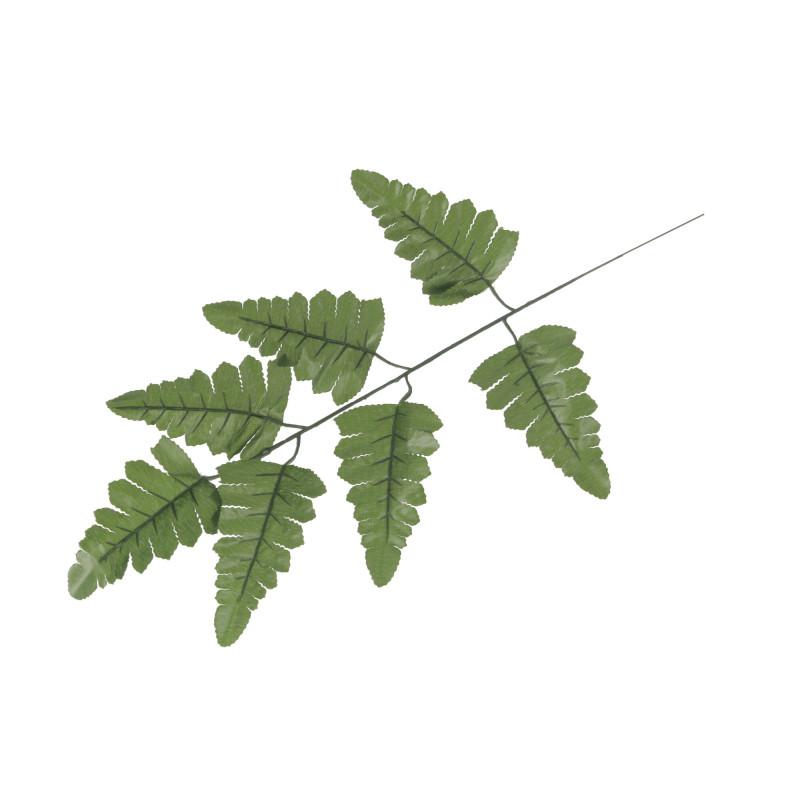 Liście ciemno zielone pterysa (paproć)