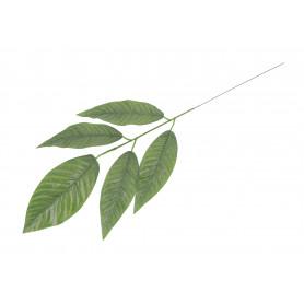 Liść mango ciemna zieleń