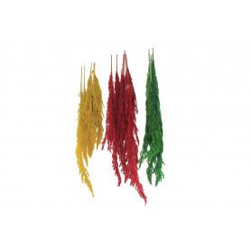 Susz naturalny Erianthus kolorowy 5szt/pacz.