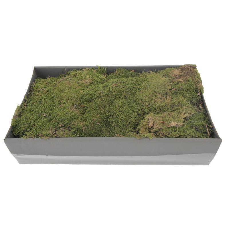 Susz naturalny fiat green moss 500g