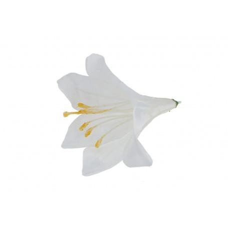 54531-pure white