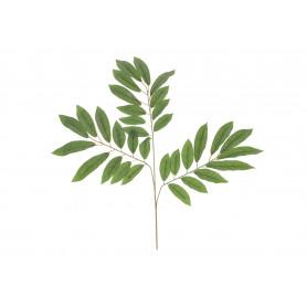 Liść zielony 3-gałązka