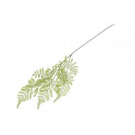 Liść Paproci