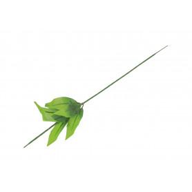 Łodyga zielona