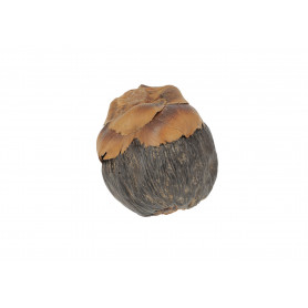 Susz naturalny Tork (palm tender)