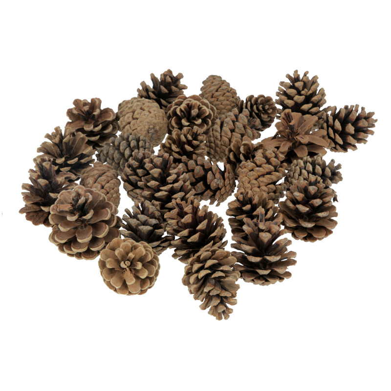 Susz naturlany Pinus Niger Extra 500g