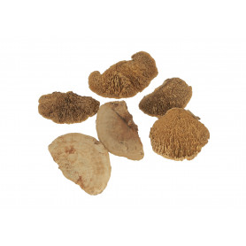 Susz naturalny grzyby sponge 11-15cm