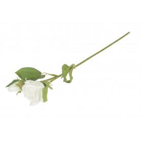 Róża mini pąk