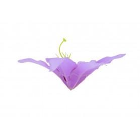 Lilia rozłożysta główka kwiatowa