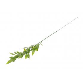Trawa Ruskus zielony 51896