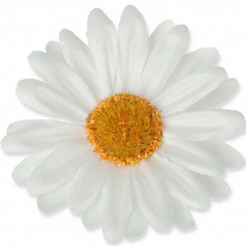 Margerytka główka kwiatowa