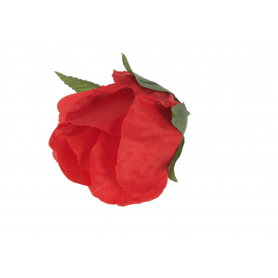 Główka kwiatowa Róży