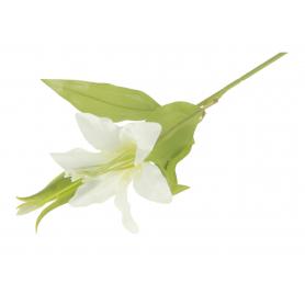 Lilia gałązka pojedyncza