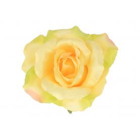 Róża rozłożysta główka kwiatowa