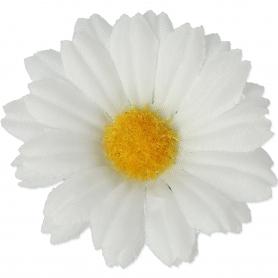 Margarytka główka kwiatowa