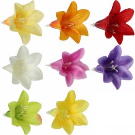 Mini Lilia główka kwiatowa