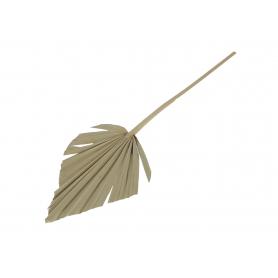 Susz  Palm Spear naturalny 2010
