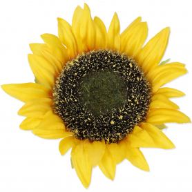 Słonecznik główka kwiatowa 58921 3181