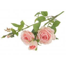 Róża gałązka  55342