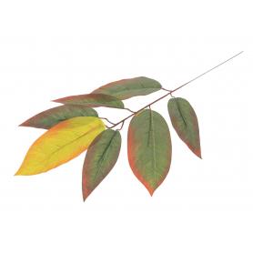 Liść Mango 55318