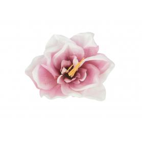 Amarylis główka kwiatowa