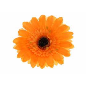 GERBERA JEDNOLITA główka kwiatowa